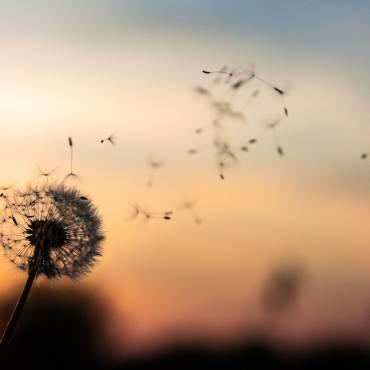 Vivement le printemps…mais pas les allergies saisonnières!